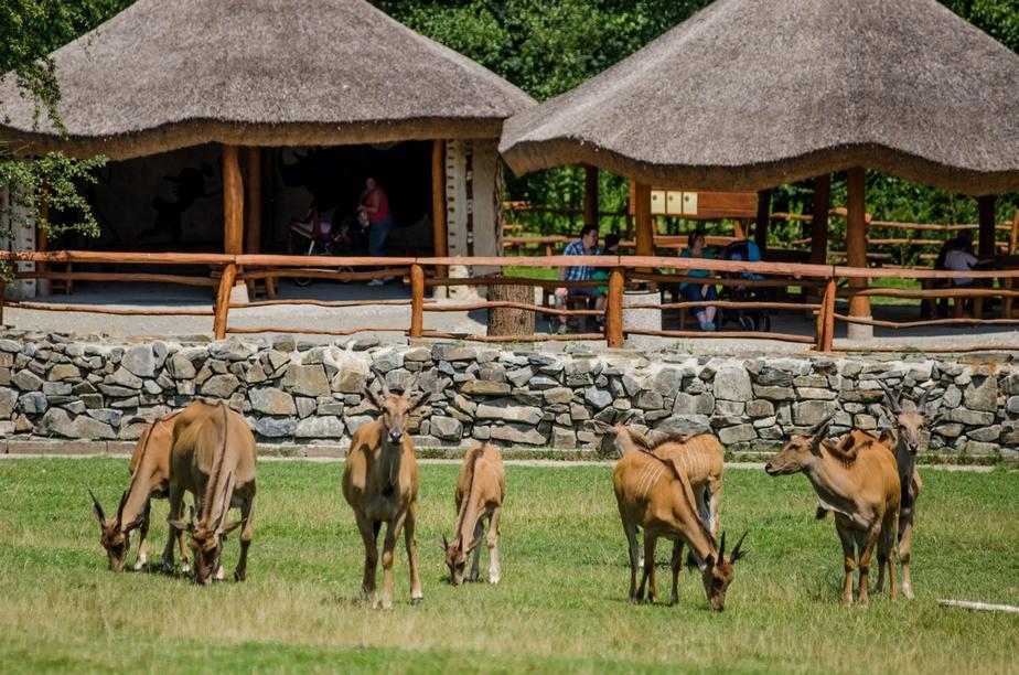 Zoo Ostrava - Czechy